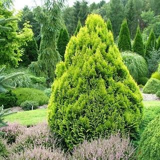 Nasiona drzew i krzewów