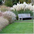 Nasiona traw ozdobnych