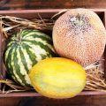 Nasiona owoców