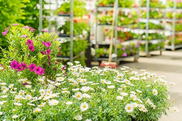 Świat Kwiatów - rośliny balkonowe