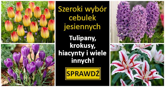 świat Kwiatów Internetowy Sklep Ogrodniczy 15000