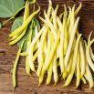 Fasola Złota Saxa - szparagowa żółtostrąkowa