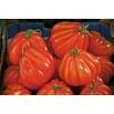Pomidor Or Pera d'Abruzzo - gruntowy, gruszkowy, duży, mięsisty