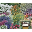 Kwietny Dywan Mieszanka karłowych kwiatów jednorocznych