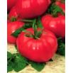 Pomidor Prezes - gruntowy, malinowy, wybitnie smaczny