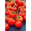 Pomidor Rumba Ożarowska - gruntowy, wcześnie dojrzewający