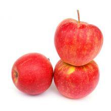 Jabłoń Szampion drzewka