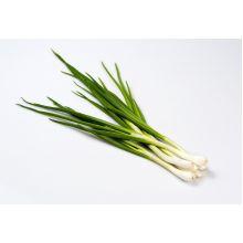 Cebula siedmiolatka Bajkal nasiona