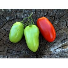 Pomidor Des Andes nasiona