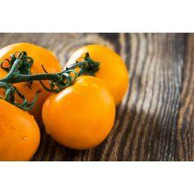 Pomidor Złoty Ożarowski