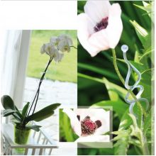 Doniczki I Osłonki Do Storczyków Sklep świat Kwiatów