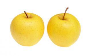 Jabłoń kosztela sadzonki