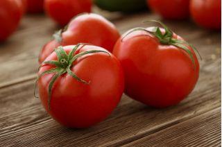 Pomidor Adam F1 - wysoki