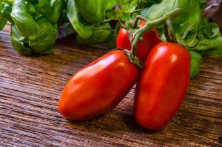 Pomidor S. Marzano 3 - gruntowy, wysoki, hit w krajach śródziemnomorskich!