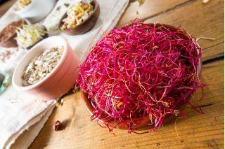 Nasiona na kiełki - Burak liściowy czerwony