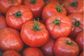 Pomidor Tolek - duże owoce, nadają się do obierania bez parzenia