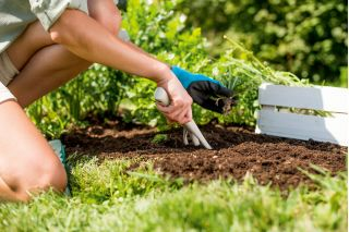 Widełki ogrodnicze - PASTEL - pastelowe błękitne - CELLFAST