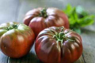 Pomidor Black Prince - gruntowy, wysoki, soczysty, słodki i aromatyczny, polecany do bezpośredniego spożycia