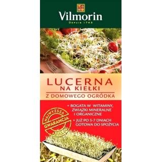 Lucerna kiełkownik - uprawa lucerny z domowego ogródka