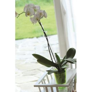 Podpórka do storczyka i innych kwiatów - spirala biała