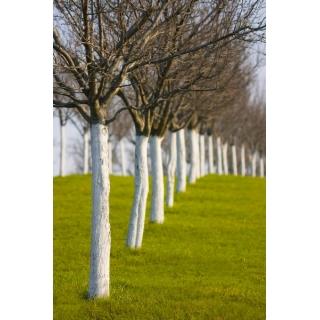 Wapno do bielenia drzew i krzewów - 4 kg
