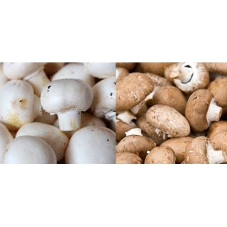Pieczarka biała i brązowa do uprawy w domu i ogrodzie - 2 w 1 - 10 kg