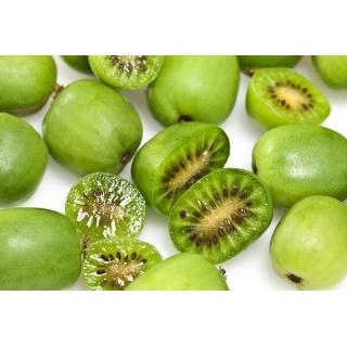 Aktinidia ostrolistna, Kiwi - Issai - sadzonka