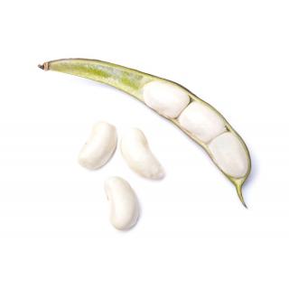 Fasola Kontra - wielkokwiatowa – na suche nasiona