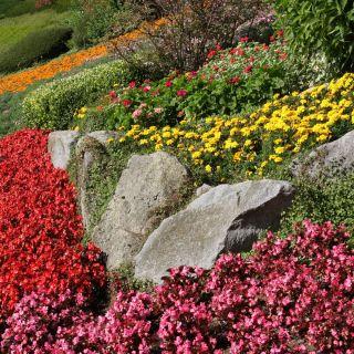 Mieszanka roślin jednorocznych do ogrodów skalnych