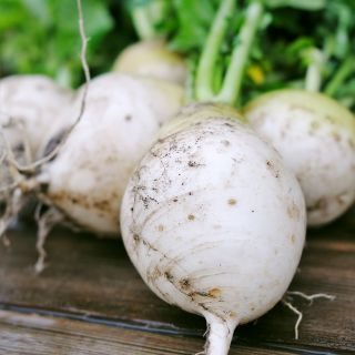 Rzepa jadalna Snowball - biała