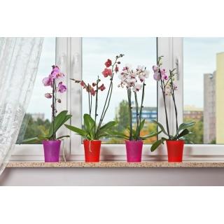 Osłonka do storczyków Orchidea - 12,5 cm - różowa transparentna