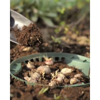 Kosz do uprawy cebul kwiatowych - 31,5 cm