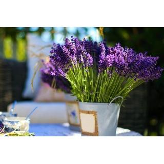 Domowy ogródek - Lawenda wąskolistna Munstead Strain - do uprawy w domu i na balkonie