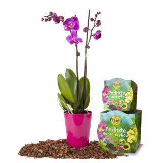 Podłoże do storczyków z doniczką - Planta - 15 cm