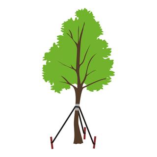 Potrójny odciąg do drzew - utrzymuje drzewka w pionie