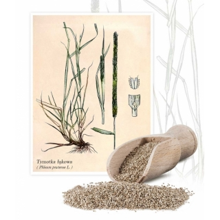 Tymotka łąkowa Alma - 1 kg