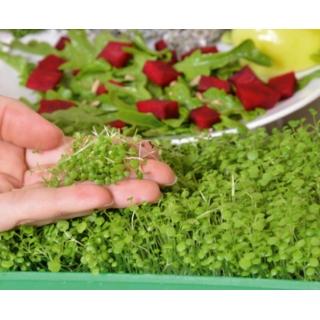 Microgreens - Rukiew wodna - młode listki o unikalnym smaku