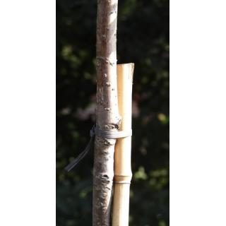 Tyczki bambusowe - 12-14 mm / 75 cm - 5 szt.