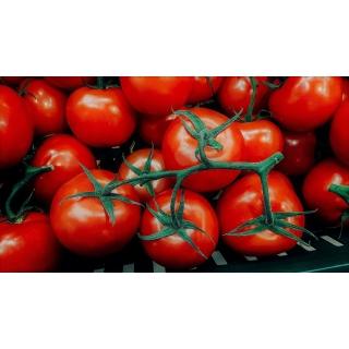 Pomidor Lubań - gruntowy, intensywnie czerwony, bez piętki