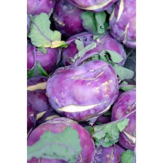 Kalarepa Blankyt - fioletowa, bardzo odporna