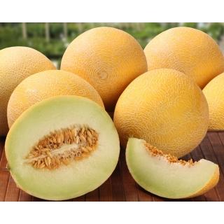 Melon Masada - jedna z najsmaczniejszych odmian na rynku