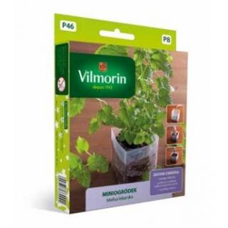 Miniogródek - Melisa lekarska - mini zestaw do uprawy w domu