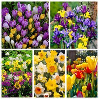 Kolorowy ogród - zestaw 5 gatunków - mix kolorów - 110 szt.