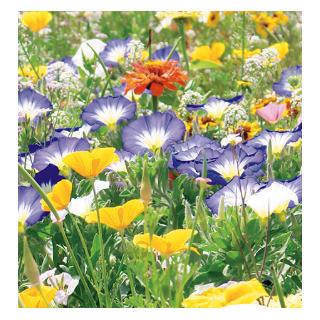 Mieszanka kwiatów - Długo Kwitnące