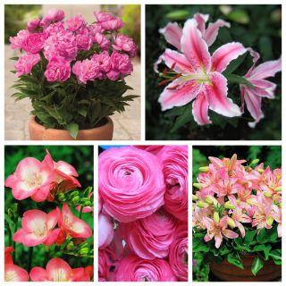Zestaw roślin do uprawy w doniczkach - kolor różowy - 5 odmian