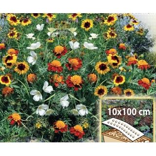 Słoneczna Rabatka - mieszanka kwiatów jednorocznych do skrzynek, na obwódki - Mata 10x100cm