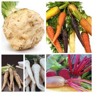 Warzywa korzeniowe - zestaw 2 - 5 gatunków nasion