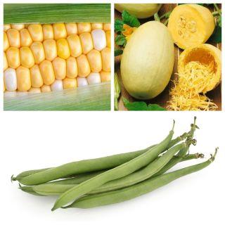 Warzywa do uprawy współrzędnej - Zestaw 3 - 3 gatunki nasion