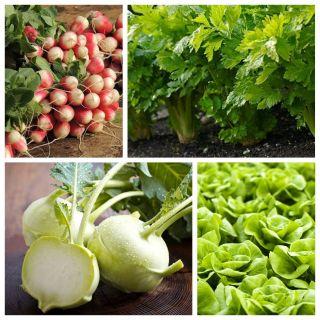 Warzywa do uprawy współrzędnej - Zestaw 5 - 4 gatunki nasion