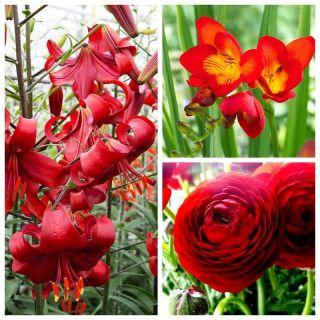 Kompozycja czerwona - zestaw 3 gatunków roślin - 54 szt.